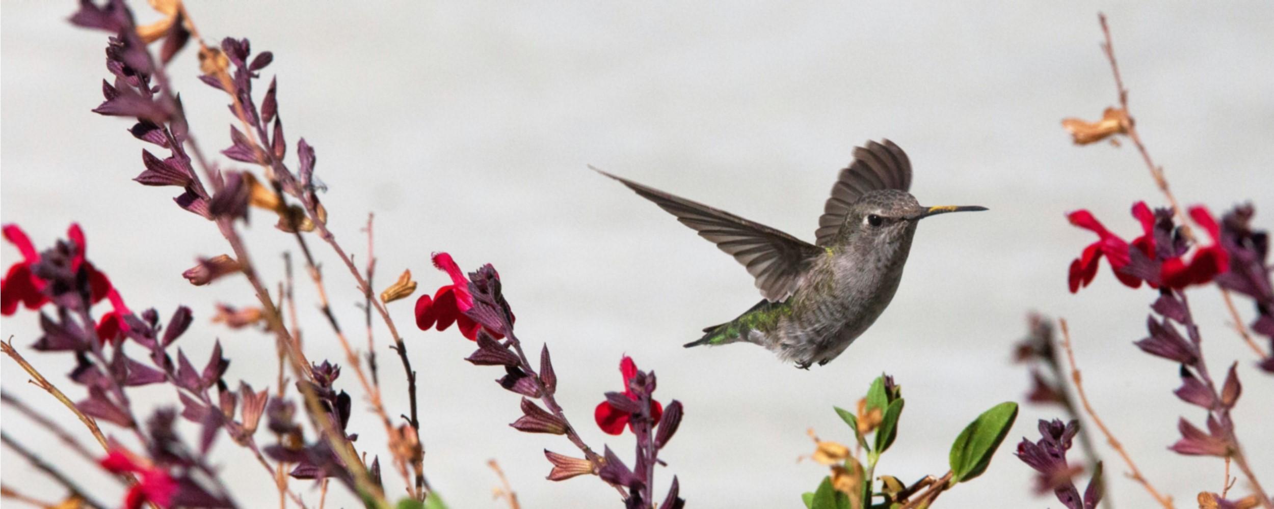 Home - Hummingbird - 2500x1000