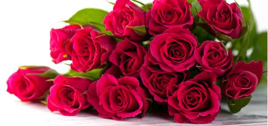RosesNivo
