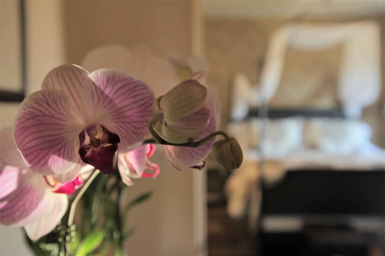 Orchids & Empire - 1500x1000