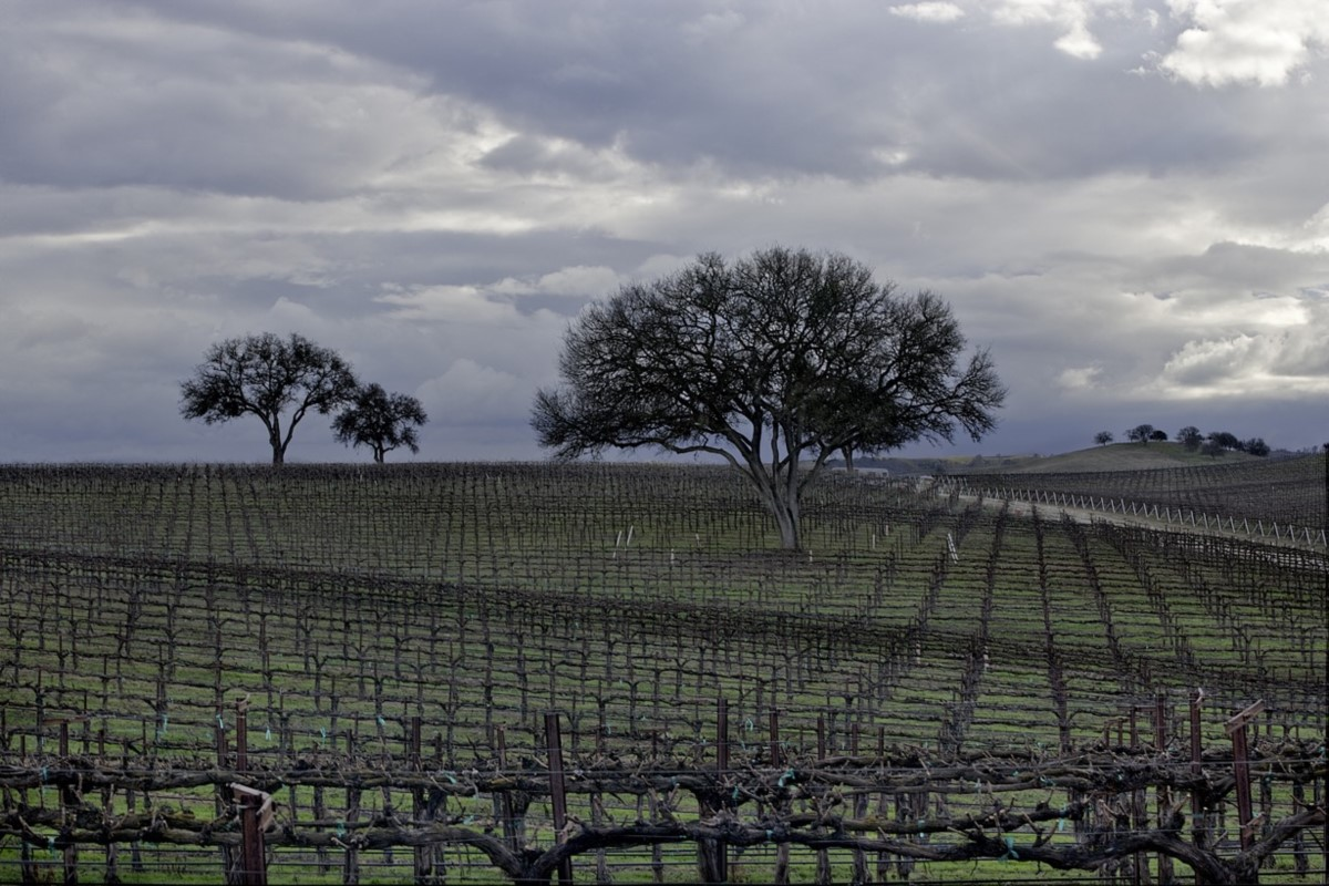 Things to Do - Winter_Vines_Oak - 1200x800