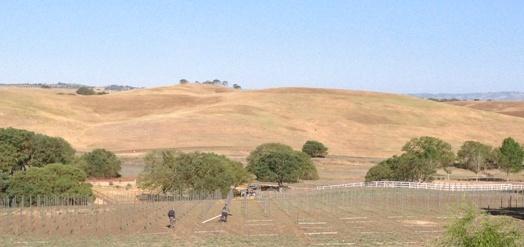 estate-vineyard-1