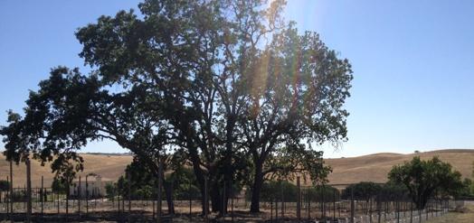 estate-vineyard-2