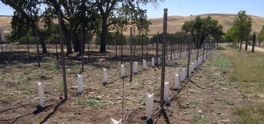 estate-vineyard-3