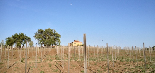 estate-vineyard-5