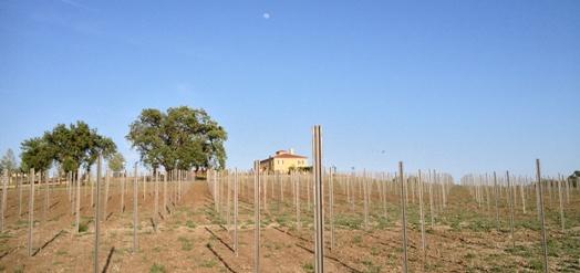 estate-vineyard-5