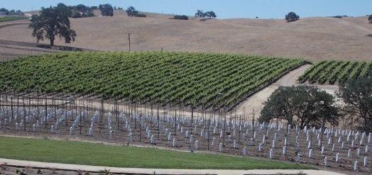 estate-vineyard-7