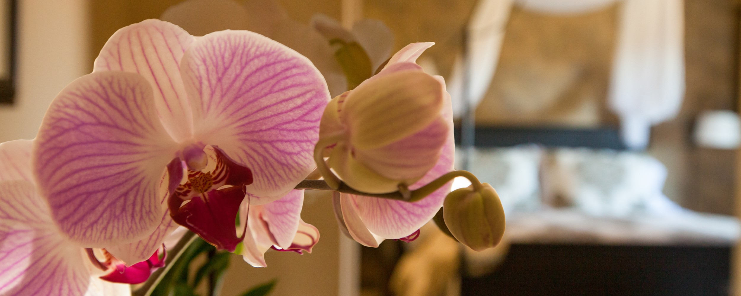 Home - Orchid & The Empire Room 2500x1000