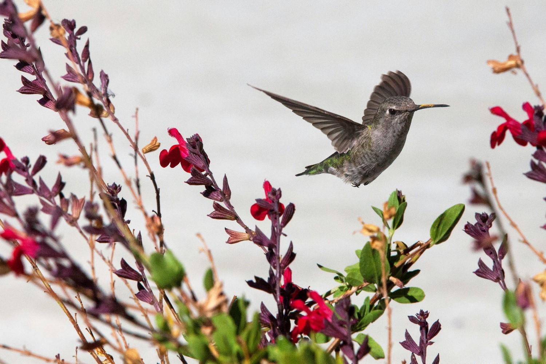 Home (Mobile) - Hummingbird - 1500x1000